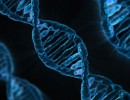 SIRT3 gene