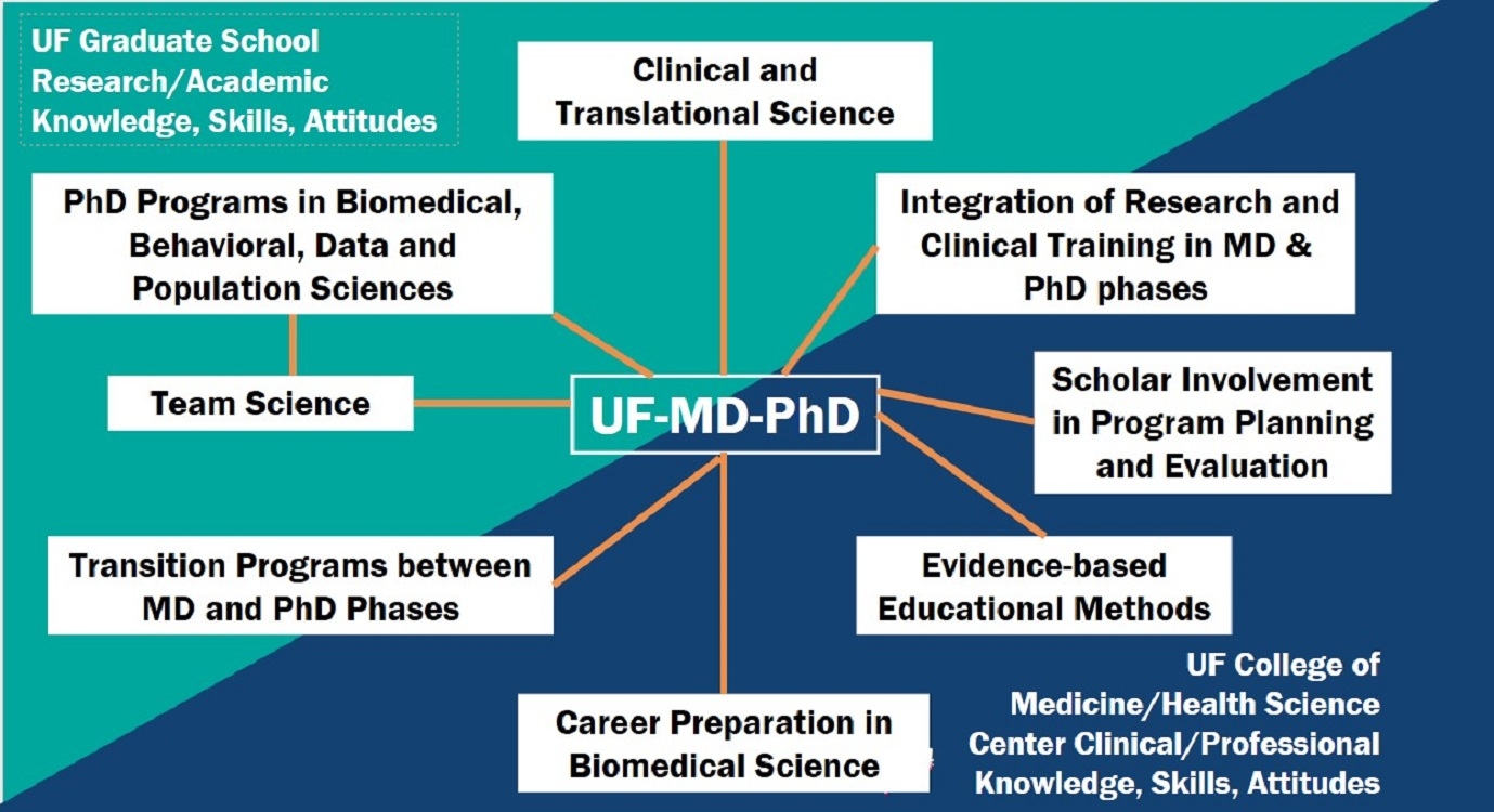 UF MD-PhD Training Program Conceptual Model, a description of the components follows the image on this page.